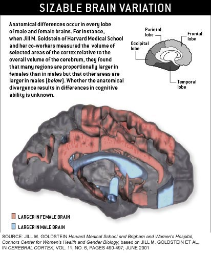 brain-dif-anatomical-scam.jpg